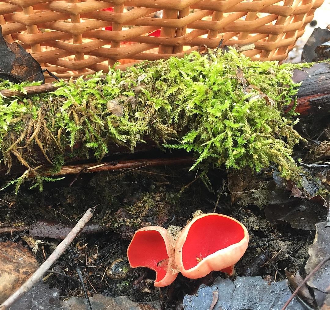 грибы в ленинградской области сегодня отзывы
